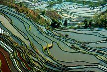 rizsföldek
