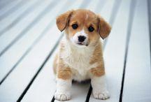 Film - Puppy Love