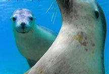 Sea lions & Penguins