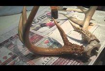 Preservering av horn