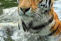 Gyönyörű állatok