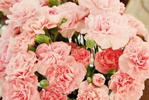 i love CARNATIONS / I have always loved carnations! They are cheaper to buy and they last longer! Love love love. / by Sonya