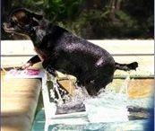 Hondenplons - idee