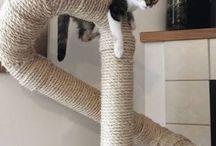 Koty- drapaki, legowiska
