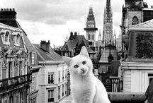 Animals Kingdom / Animals Kingdom