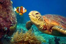 Turtles ❤