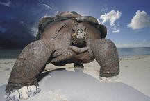 Galapagos Islands / Volunteer Ecuador Galapagos Islands  https://www.abroaderview.org / by ABroaderview Volunteers Abroad