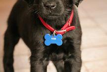 (Puppy Love) / by Lauren Allen