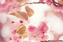 Pink and alike