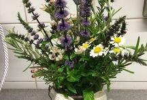 Herb display