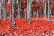 True Colors / RED - vivid and intense