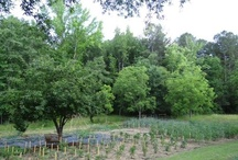 Our Maple Valley Garden