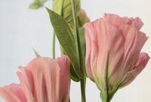 Záhrada & kvety