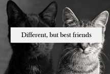 Friends, they are wonderful