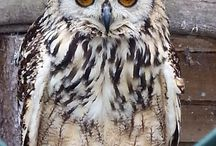 Owls / Shropshire's largest privately owned collection