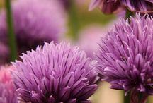 Combination wiht purple