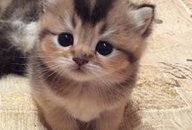 ❤ Cute Pets ❤