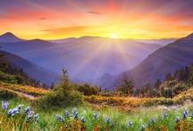 Beauty of God's Work / by Monica Miller