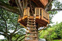 Case în copac