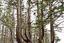 Life as a Tree