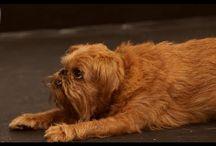 for Robi (my new Grand dog) / by Carol Nolan