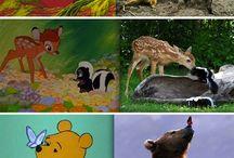 Animal fuzzies