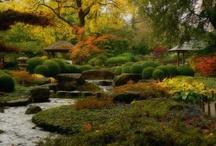 tuin; garden / ładne