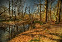 Landschap / Natuur / Limburgse landschap en natuur