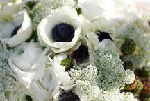 Λουλούδια - Flowers