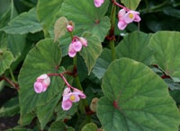 Shade perennials in my NW garden / by karen colleran