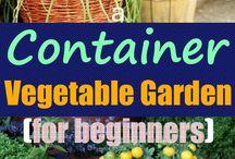 Gardening veggies and herbs