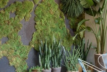 vertical garden/vegetal wall/living picture