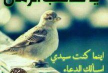 الامام المهدي عجل الله تعالى فرجه الشريف