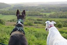 A Hound with a View / Walk in the Purbeck Hills