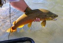 TRUCKEE RIVER CALIFORNIA & NEVADA / Fly fishing the Truckee River in California and Nevada.