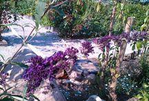 Have / Billeder og gode ideer til haven