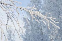 Merletti di neve