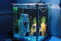Daniel's Fish Tank