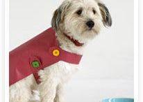modele manteau chien