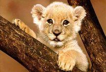 Lion Cub. Lion Cub!! / by Hannah Galbreath