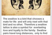 swallos