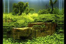 Aquarium ideeen