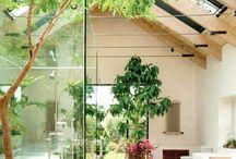 Skylight house plants