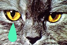 Cat, Gato, Chat, Mao! / by Alessia Garzia