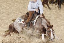 cattle horses