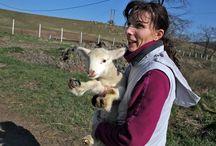 Állattartás -- Animal farming