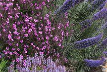plantes sécheresse