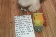 Cat Shaming / by Kǝlly Wolf