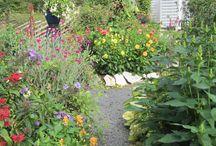 bilder från vår trädgård