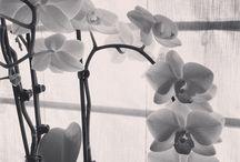 Flowers / Beautifull Flowers